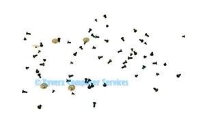 1545 GENUINE DELL SCREW KIT INSPIRON 1545 (GRADE A) (CC54