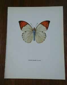 details about vintage butterfly