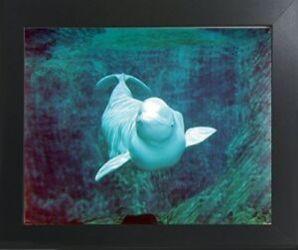 whale underwater beluga framed ocean nature animal decor wall print