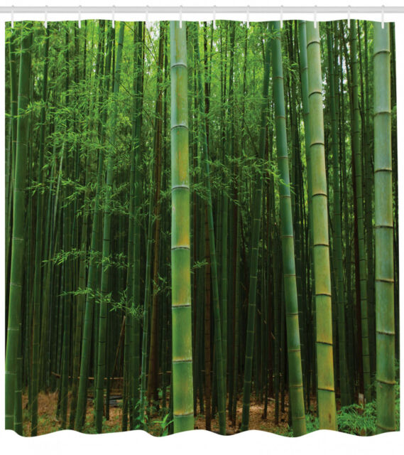 picture of a bamboo