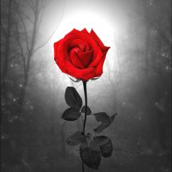 Framed Wall Art For Living Room Ideas With Wood Walls Red Rose Landscape Decor Photo Photography Flower ...