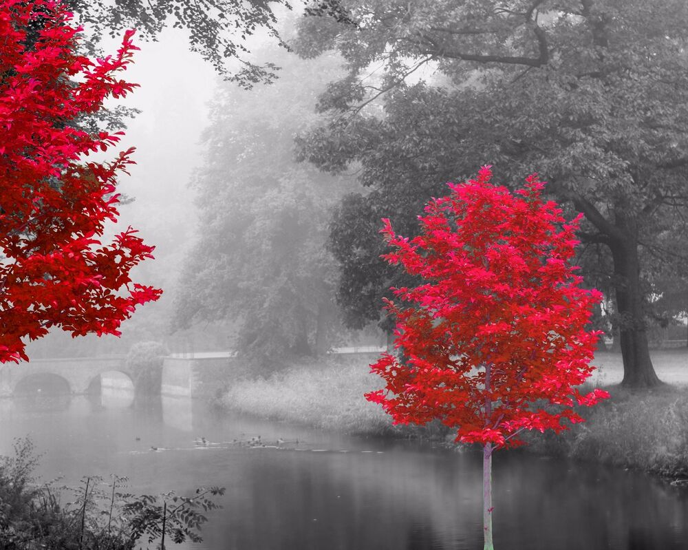 Red Gray Black Home Decor Wall Art Photo Print Trees