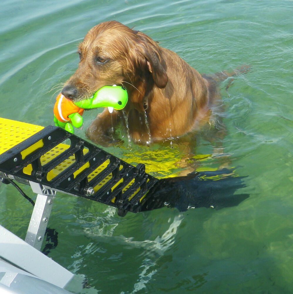 WAG Dog Boarding Steps for Recreational Boats vs LaddersRampsPlatforms  eBay