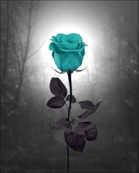 Teal Rose Landscape Wall Decor Photo Art Surreal ...