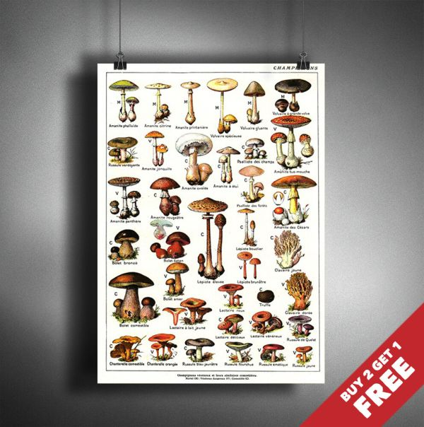 Vintage French Mushroom Chart A3 A4 Botanical Map Poster