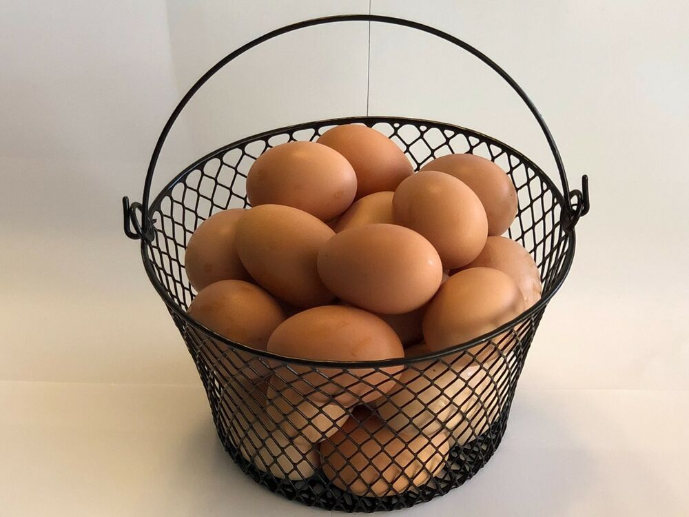 WIRE CHICKEN EGG BASKET FOR GATHERING EGGS POULTRY