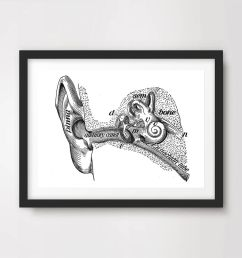 details about inner ear labeled diagram art print poster decor wall chart illustration a4 a3a2 [ 1000 x 1000 Pixel ]