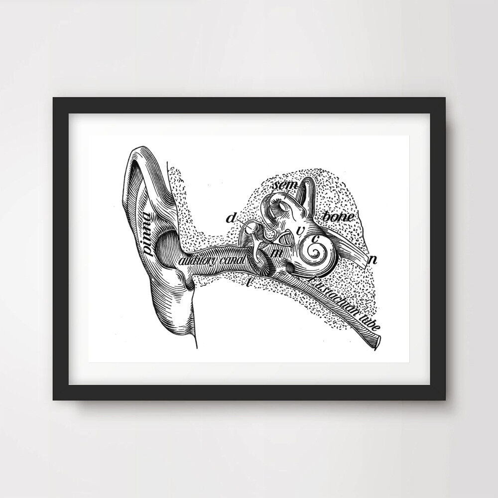 medium resolution of details about inner ear labeled diagram art print poster decor wall chart illustration a4 a3a2