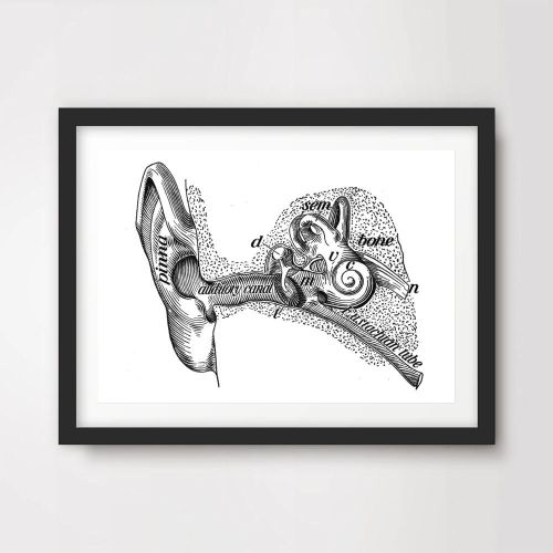 small resolution of details about inner ear labeled diagram art print poster decor wall chart illustration a4 a3a2