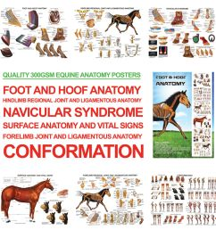 a3 foot and hoof horse anatomy posters for farriers farriery vets  [ 1000 x 1000 Pixel ]