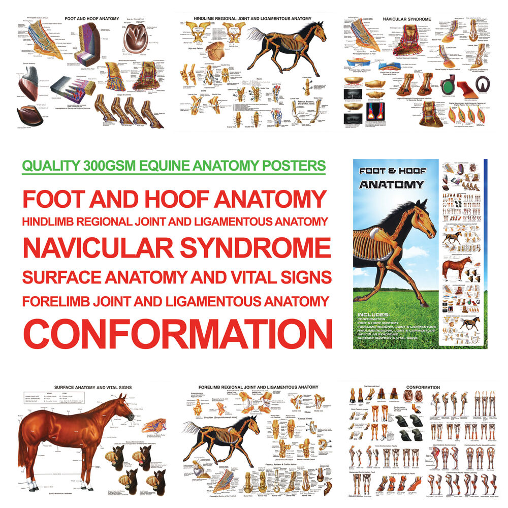 hight resolution of a3 foot and hoof horse anatomy posters for farriers farriery vets