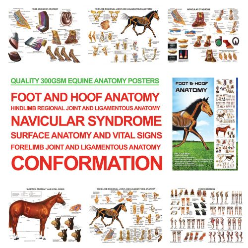small resolution of a3 foot and hoof horse anatomy posters for farriers farriery vets
