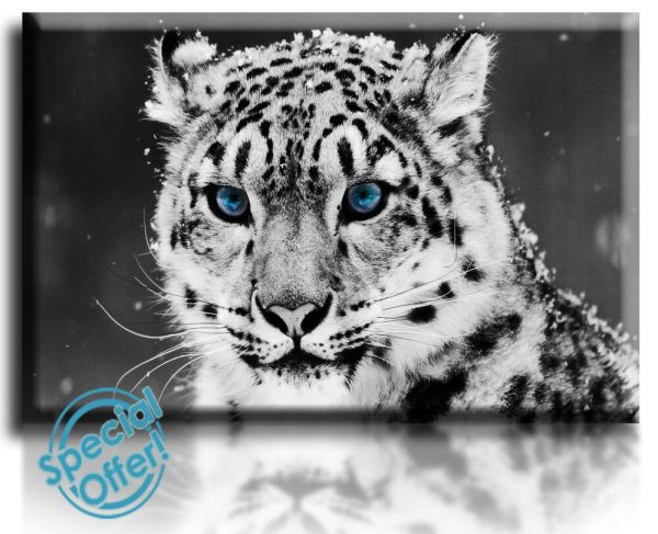 Snow Leopard Wall Art Canvas
