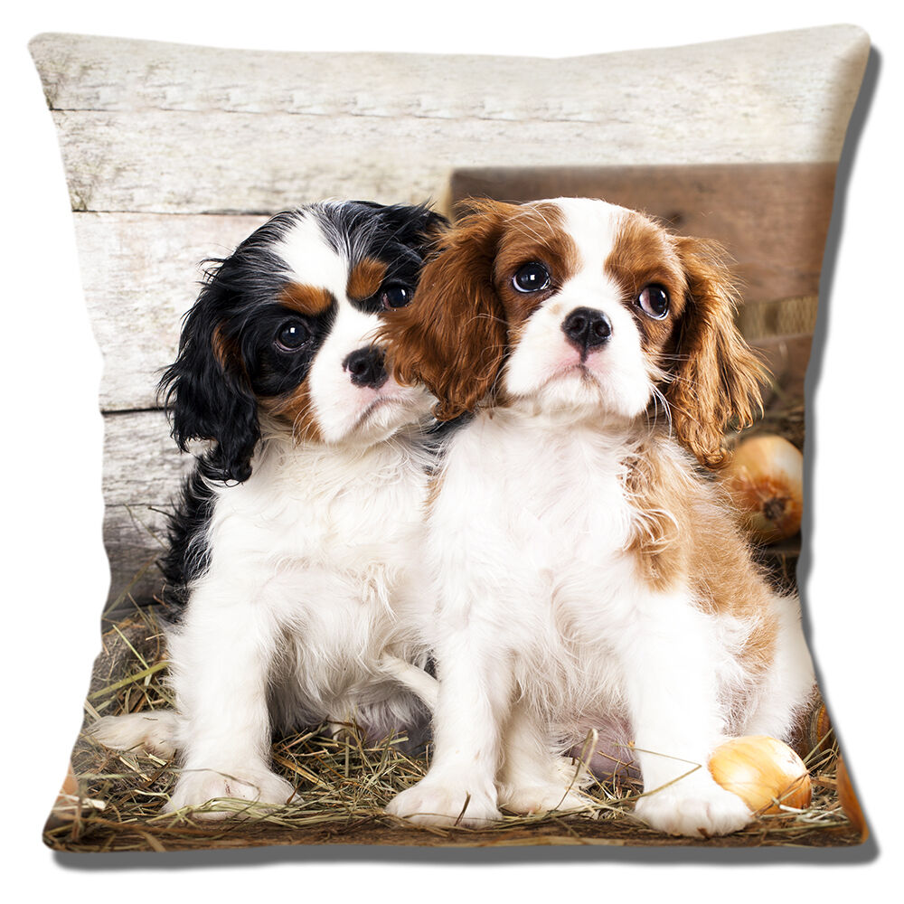 King Charles Cavalier Spaniel Puppies Cushion Cover Black