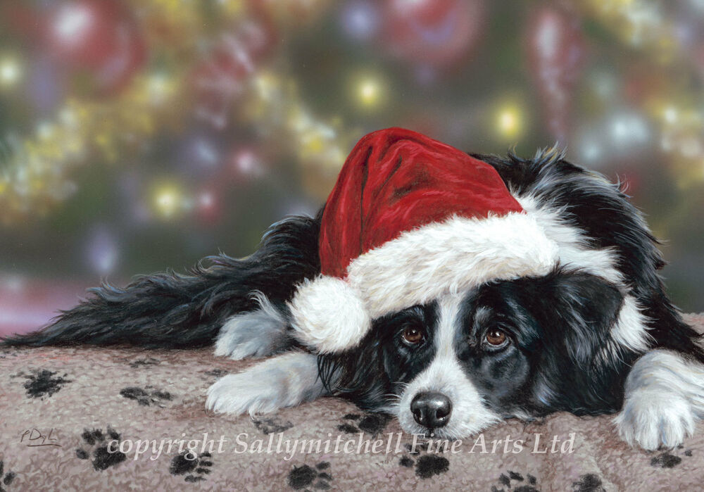 Border Collie Working Collie Christmas Cards Pack Of 10