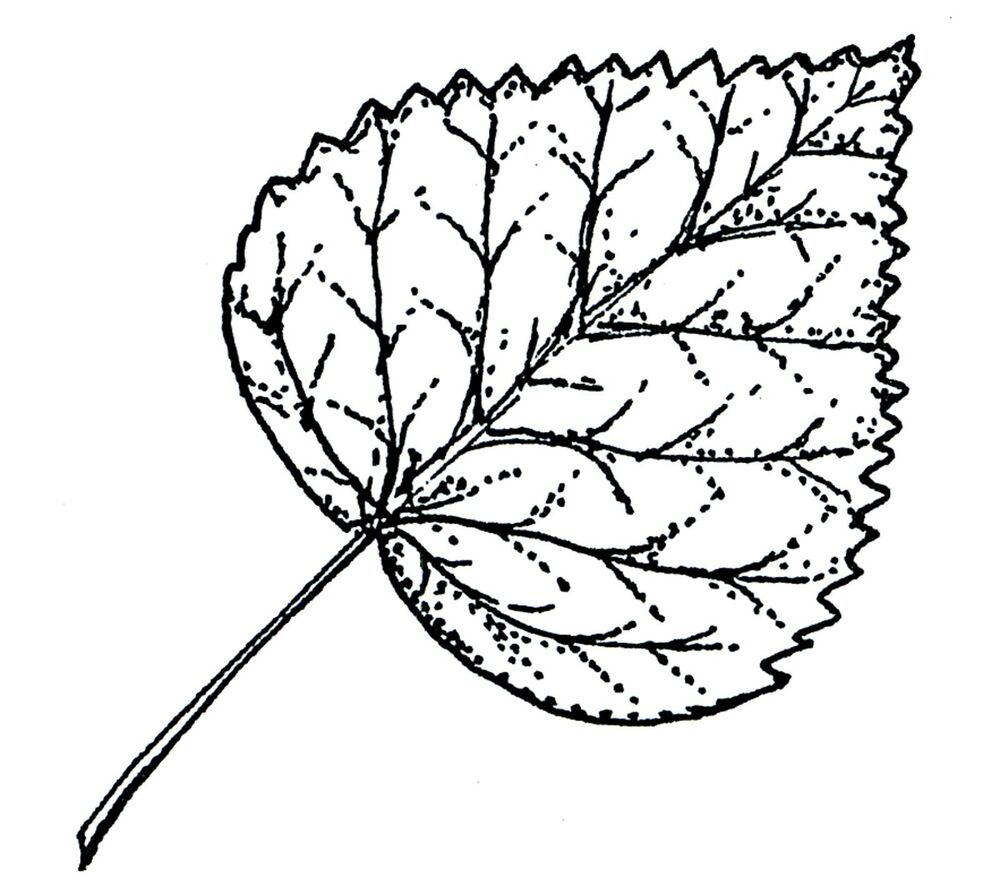 Fall Leaf Aspen Leaf Autumn Wood Mounted Rubber Stamp