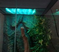 DECORATIVE RGB COLOUR CHANGE LED STRIP VIVARIUM LIGHTING ...