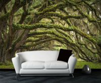 Live Oaks Avenue Trees Full Wall Mural Photo Wallpaper ...
