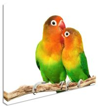 Wall Art Large Animal Love Birds Canvas Pictures | eBay