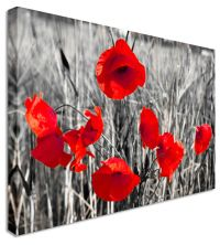 Poppy Red Black & White Flower - Canvas Wall Art Pictures ...
