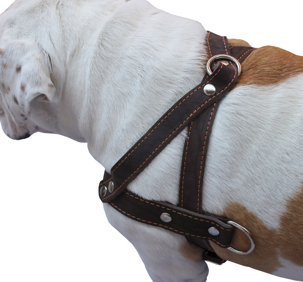 Genuine Leather Dog Pulling Harness 1 5 Wide 25 5 31
