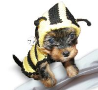 Bee Dog Costume sweater hoodie puppy pet clothes Clothing ...