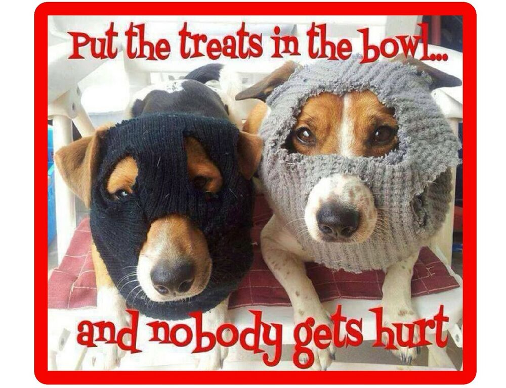 Funny Jack Russell Terrier Dog Bandits Refrigerator Tool
