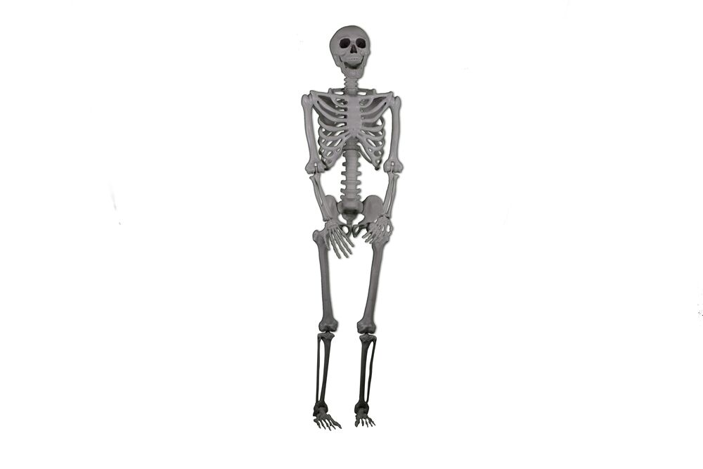 LIFE-SIZED Realistic Posable Skeleton Prop 5ft, HALLOWEEN