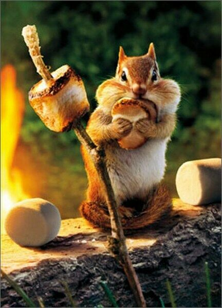 Chipmunk Roasts Marshmallow Funny Birthday Card Greeting