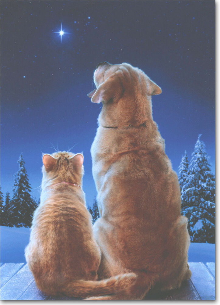 Cat Amp Dog Star Boxed Christmas Cards 10 Greeting Cards