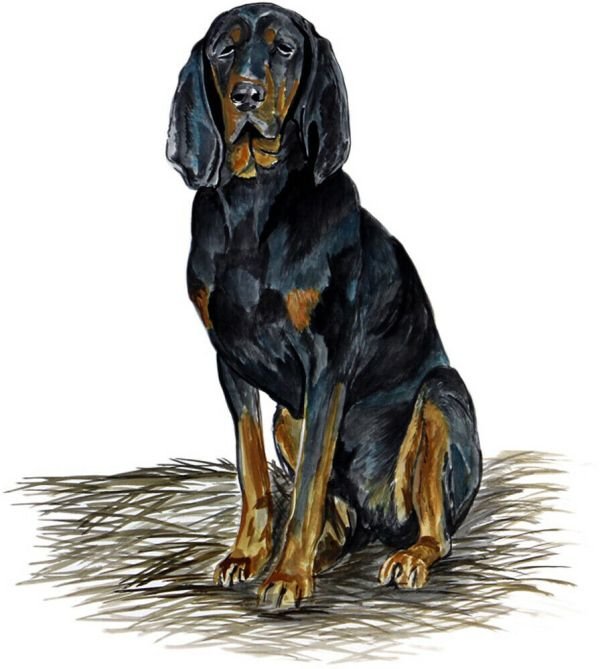 Decal Hunting Coon Hound