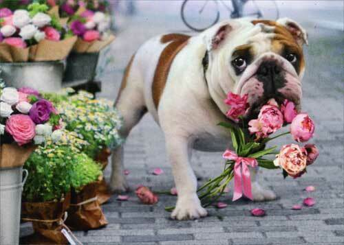 Dog With Bouquet In Mouth Funny Get Well Card Greeting