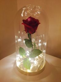 Beauty And The Beast Disney Enchanted Rose Dome Bell Jar ...