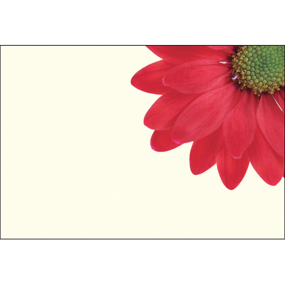 25 Florist Message Cards Choose From Plain Funeral Or