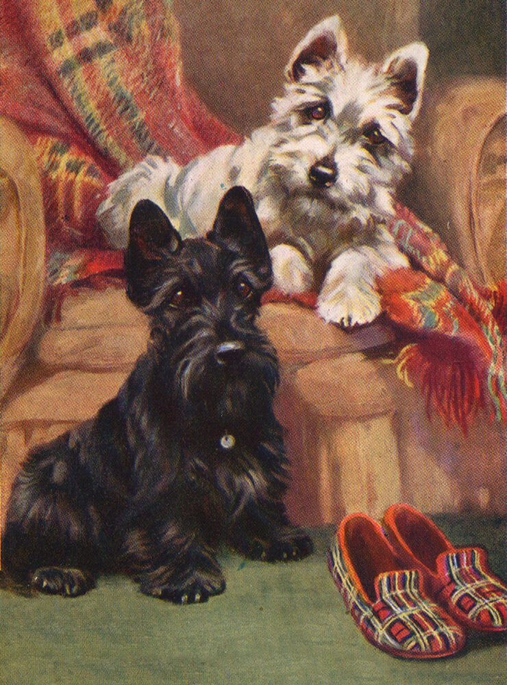 SCOTTISH TERRIER CHARMING SCOTTIE WESTIE AND SLIPPERS DOG