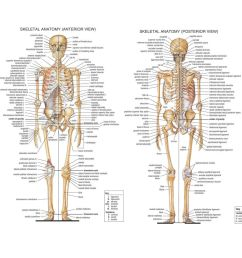 details about skeletal system anatomical chart silk poster 13x18 24x32inch medical science [ 1000 x 1000 Pixel ]
