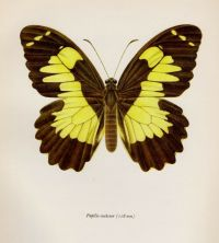 Vintage BUTTERFLY Print Insect Print Gallery Wall Art ...
