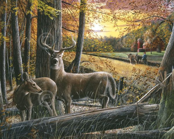 Wildlife Art Print - Autumn Harvest Kevin Daniel Deer Buck Doe Poster 19x13