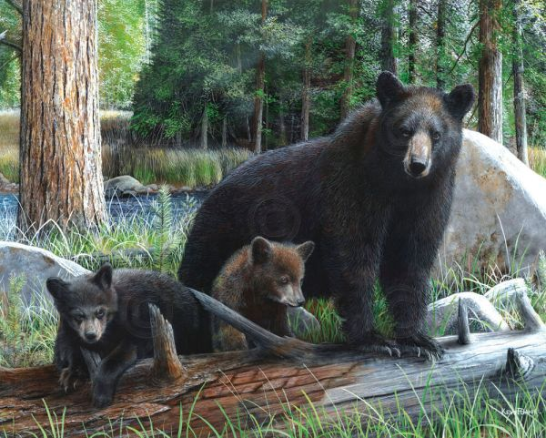 Bear Art Print - Discoveries Kevin Daniel Wildlife