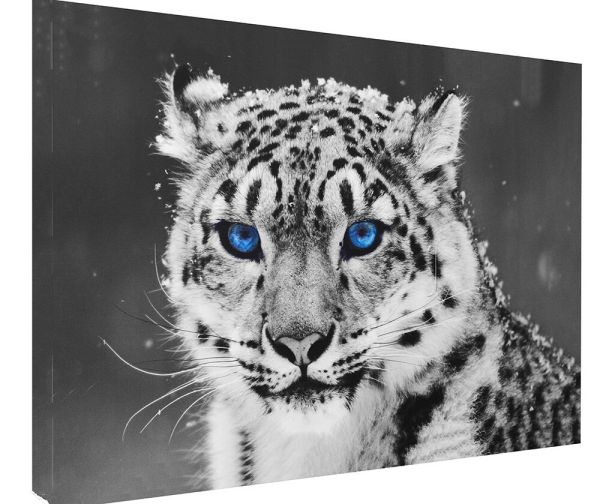 Animal Big Cat Snow Leopard Blue Eye Canvas Print Wall Art