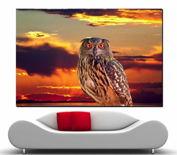 Canvas Giclee Wall Home Prints Fine Art Great Owl Print Colorful Sun Set 2