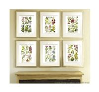 Antique Botanical Print set of 6 Wild Flowers English