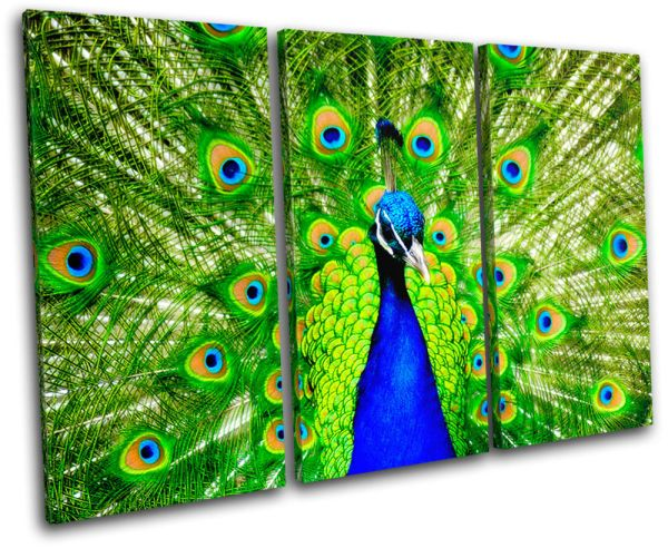 Peacock Feathers Animals Treble Canvas Wall Art