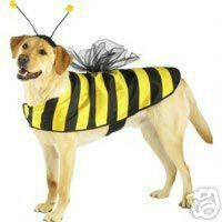 Casual Canine Bumble Bee Dog Halloween Costume XS S M L XL ...
