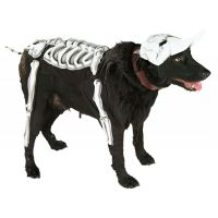 Skeleton Dog Costume Pet Halloween Fancy Dress | eBay