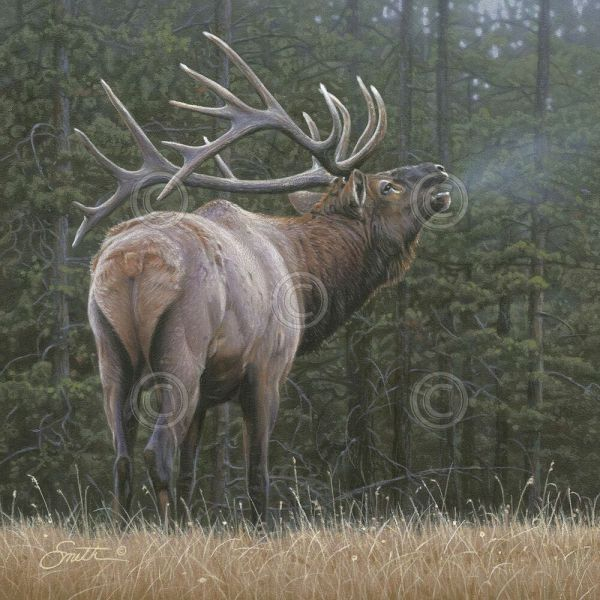 Elk Art Print - Broken Silence Daniel Smith 11x14 Wildlife Poster