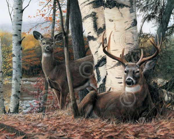 Deer Art Print - Autumn Majesty Kevin Daniel Wildlife Buck Poster 30x24