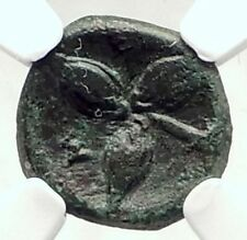 METAPONTION Metapontum in LUCANIA Ancient 300BC Greek Coin ATHENA NGC i72877