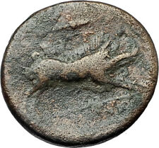 ARPI in APULIA Authentic Ancient 325BC Greek Coin w ZEUS CALYDONIAN BOAR i68023
