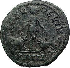 GORDIAN III 240AD Viminacium BULL LION Legions HUGE Ancient Roman Coin i73364